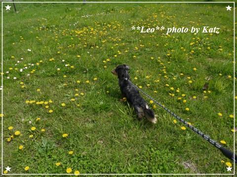 20120519 Leo (5)