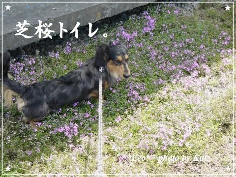 20120519 Leo (4)