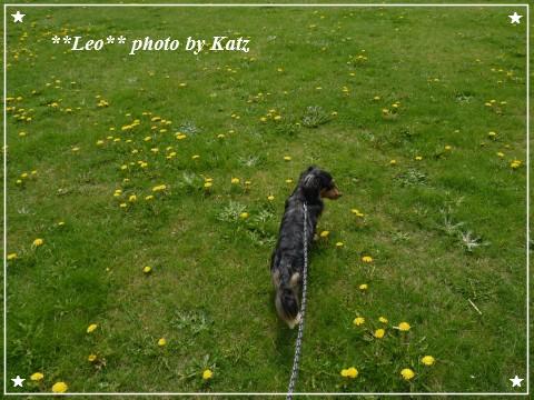 20120519 Leo (2)