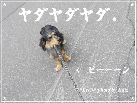 20120616 Leo (7)