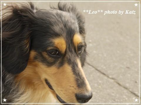 20120623 Leo (4)