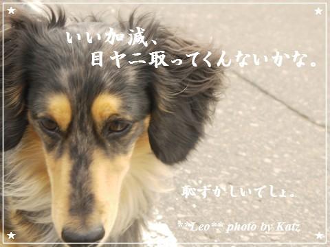20120623 Leo (6)