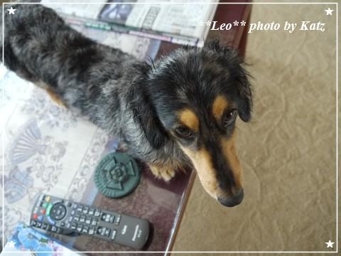 20120714 Leo (3)