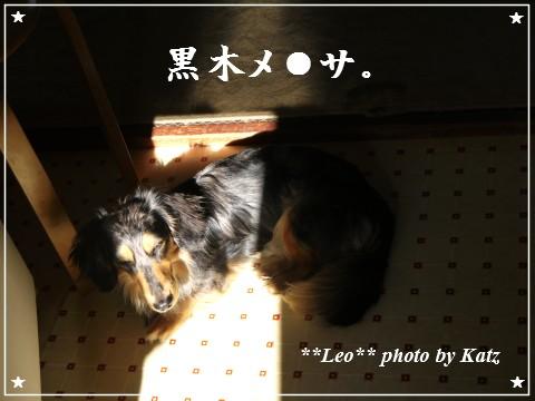 20120625 Leo (1)