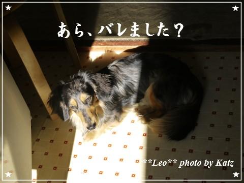 20120625 Leo (2)