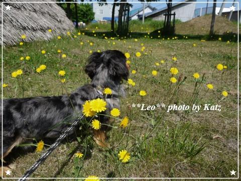 20120707 Leo (4)