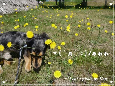 20120707 Leo (3)