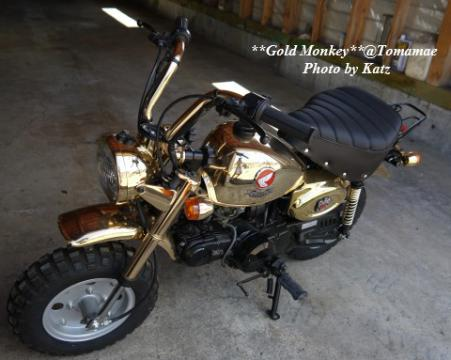 Gold Monkey (2)