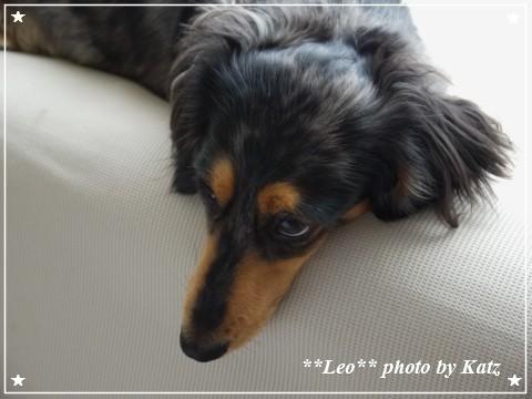 20120728 Leo (4)