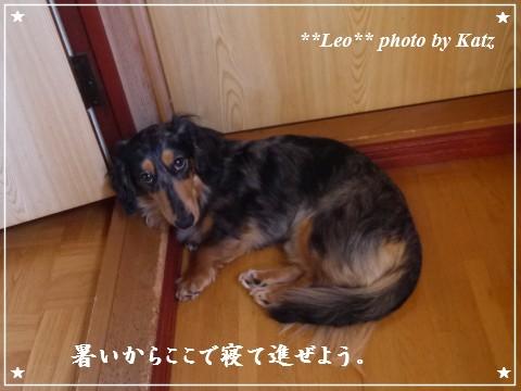 20120730 Leo (1)