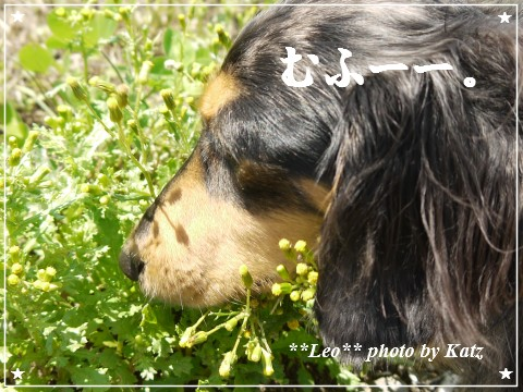 20120817 Leo (4)