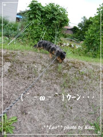 20120819 Leo (1)