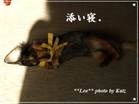 201200825(朝) Leo (4)