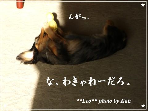 201200825(朝) Leo (3)