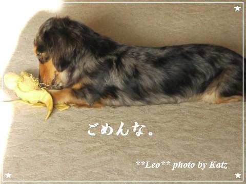 201200825(朝) Leo (8)
