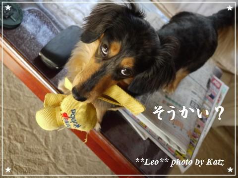 201200825(朝) Leo (7)