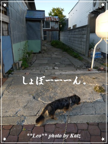 20120825(夕) Leo (2)
