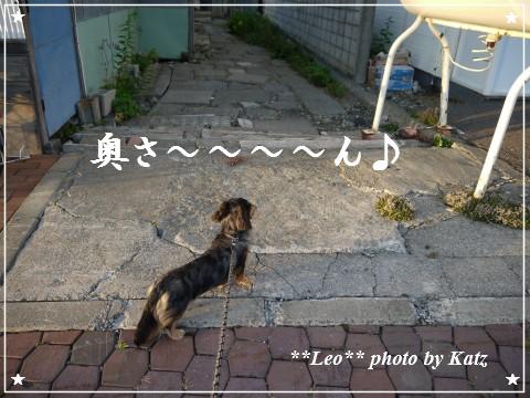 20120825(夕) Leo (1)