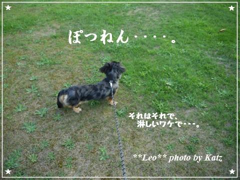 20120825(夕) Leo (7)