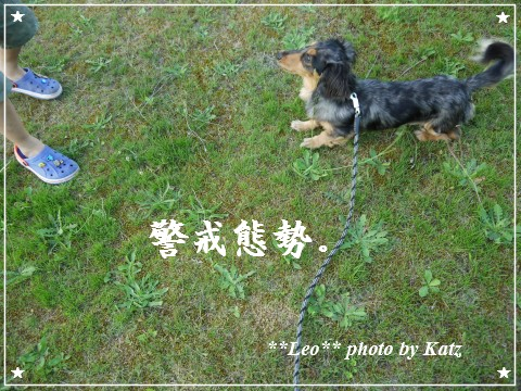 20120825(夕) Leo (3)