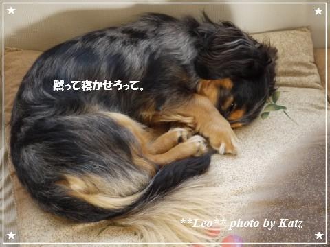 20120829 Leo (2)