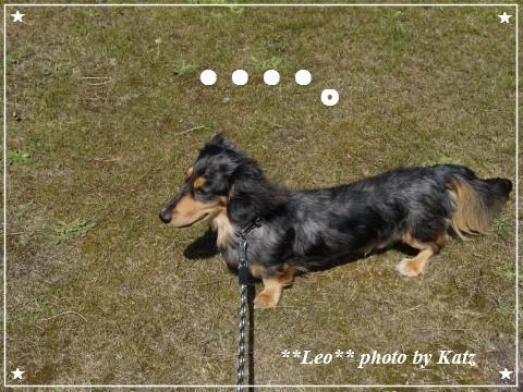 20120908 Leo (6)