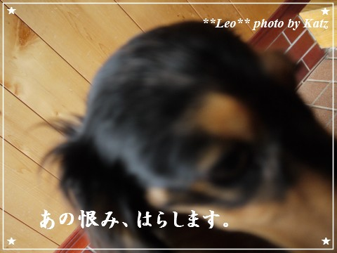 20120916 Leo (3)