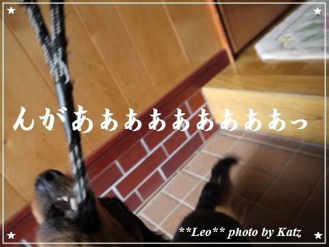 20120916 Leo (2)