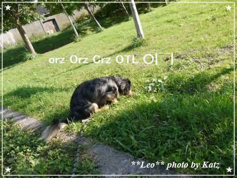 20120916 Leo (4)