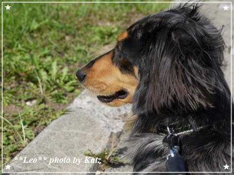 20120921 Leo (2)