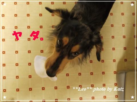 20120926 Leo (5)
