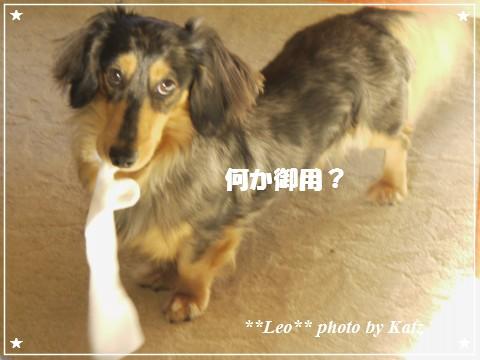 20120926 Leo (2)