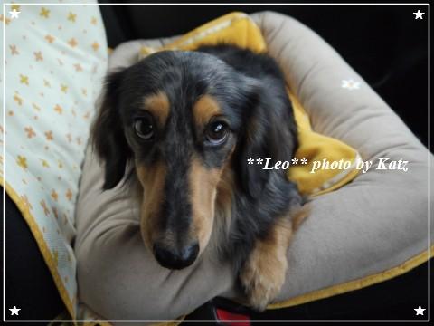 20121020 Leo (2)