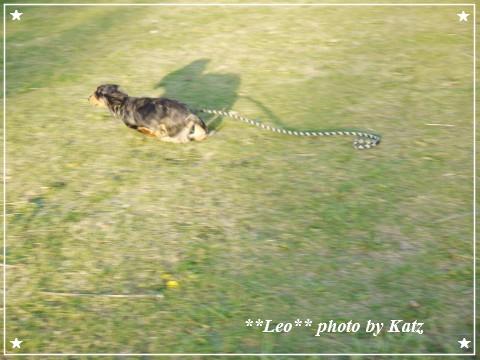 20121027 Leo (8)