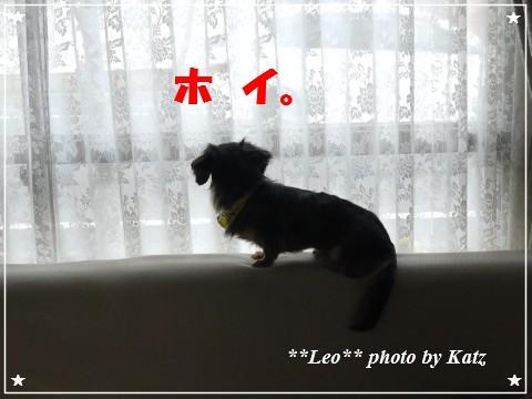 20121025 Leo (6)