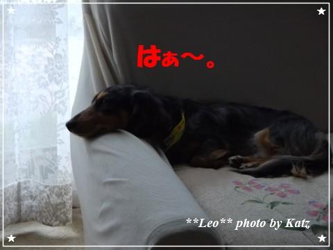 20121025 Leo (2)