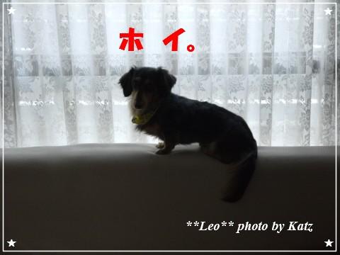 20121025 Leo (3)