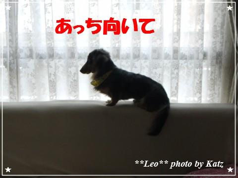 20121025 Leo (5)