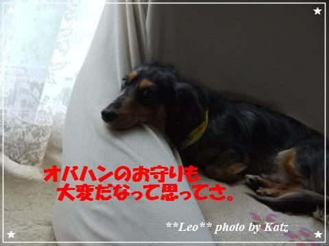 20121025 Leo (4)