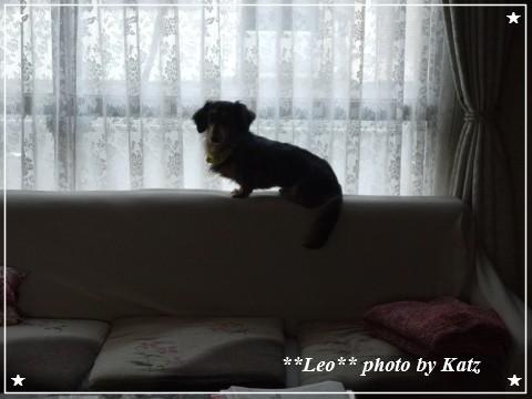 20121025 Leo (1)