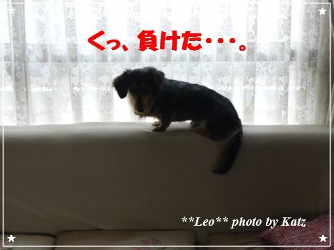 20121025 Leo (7)