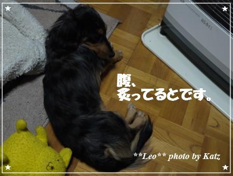 20121116 Leo (5)