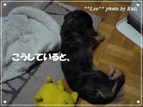 20121116 Leo (6)