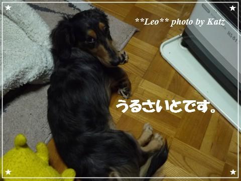 20121116 Leo (1)