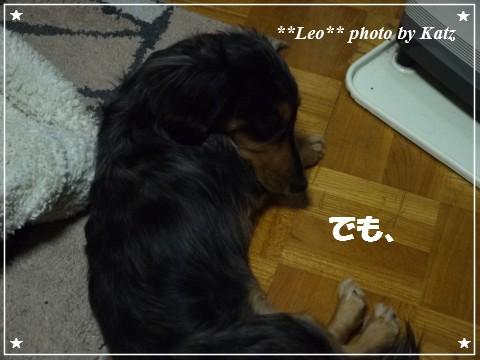 20121116 Leo (2)