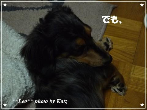 20121116 Leo (4)