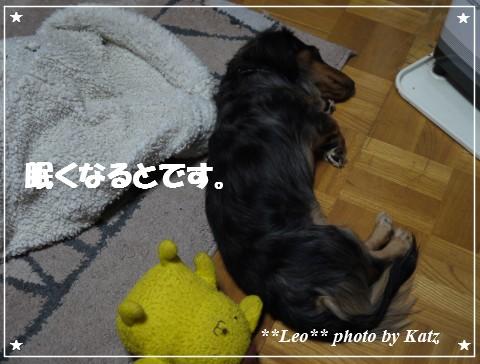 20121116 Leo (7)