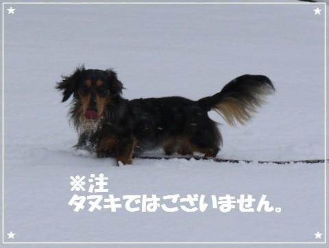 20121123 Leo (6)