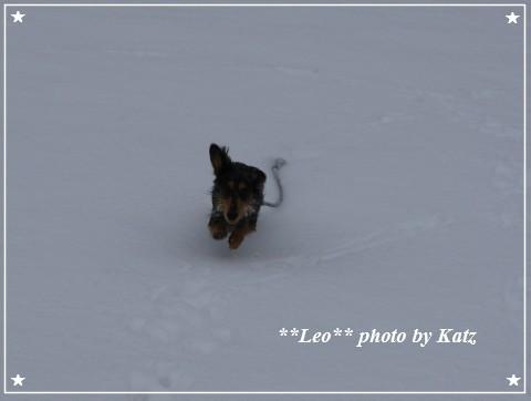 20121123 Leo (7)
