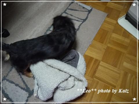 20121127 Leo (2)